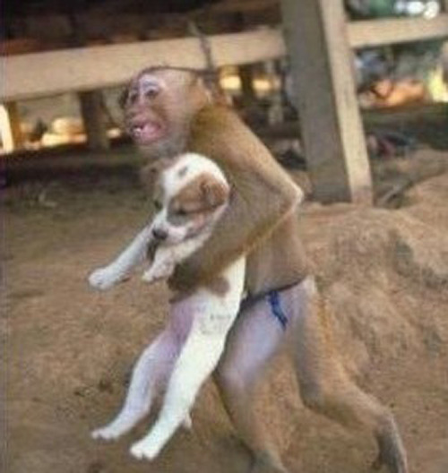 patrickschwasted:  heatnap:  Monkey Saves Puppy from Explosion Here is a bizarre bit of news coming out of the pipeline explosion in Nanjing, China that killed 13 people and injured 300, and not it is not the news that 4 people were arrested - it is this remarkable photo of monkey grabbing a puppy dog and running away from the explosion and fire.  (via quiapoboi)