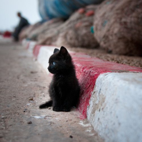 Kittens Tiny black kitten by the curb