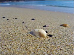 Sea shell by the sea shore by ~KoenigseggBG