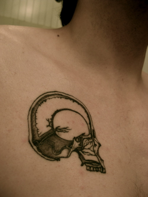 fuckyeahtattoos:  Illustration from the original Grays Anatomy first published in 1901