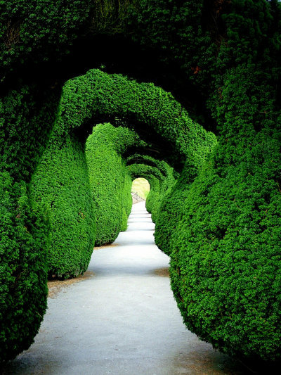 random-brilliance:  sunsurfer:Green Tunnel, Castle Garden, United Kingdom, photo by mgsblade