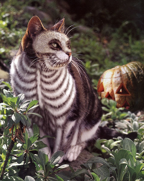 Tim Burton's kitty