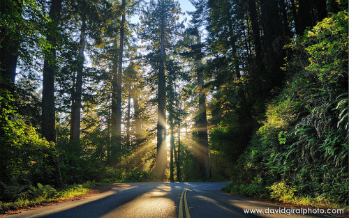 The blissful road to happiness,HDR/DRI | Redwood National Park, California (by David Giral)