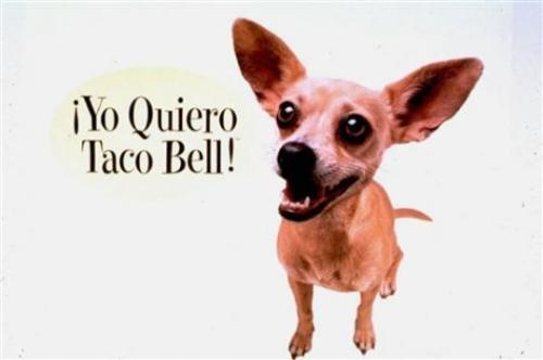 I miss this little guy.  i!YO QUIERO TACO BELL!i