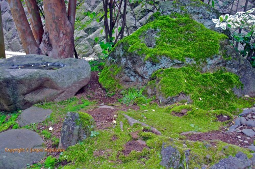 A wonderful mossy garden with a natural rock tsukubai in my friends private garden in Atsugi, Kanagawa prefecture.