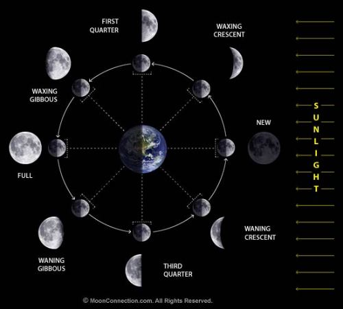 jacony:  fuckyeahspace:   Moon Phases Explained by moonconnection.com This graphic is helpful but just a little bit misleading. Keep in mind that the moon is tidally locked with the Earth, meaning that one side of the moon always faces us. That's why it looks so distinctively familiar all the time. In the above picture, it's depicted that the sun always shines on the same side of the moon. False. The illuminated side of the moon is always changing as the moon rotates around us and one same side of the moon is always facing us. The phases of the moon are just further incredibly beautiful proof of orbit, that the moon is a hunk rock hurtling through space around another hunk of rock and together they're hurtling around a mound of helium and hydrogen—our star, the Sun.