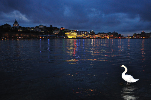 Swan looking out over Stockholm at night  Copyright @ Andreas Tóth 2010