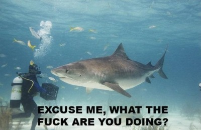 thedailywhat:  X is X of the Day: Quizzical tiger shark is quizzical. [reddit.]