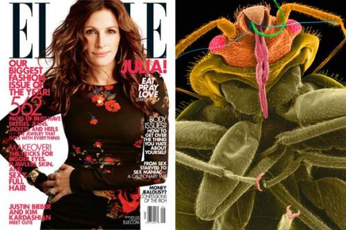 Elle Magazine Invaded by Bedbugs—Office Closes Temporarily Those pesky bedbugs are so starved for fashion. After recently crawling their way through several New York City stores including Hollister, Abercrombie & Fitch, and Victoria's Secret, the bloodsucking critters have forced the temporary closure of Elle magazine's NYC offices, the New York Post reports. Full story on StyleList after the jump. [The Elle offices have been closed temporarily due to a bedbug infestation. Bug photo: Dennis Kunke / Microscopy, Inc., Visuals Unlimited, Inc. / Corbis]