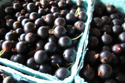 Black Currants at New Amsterdam Market