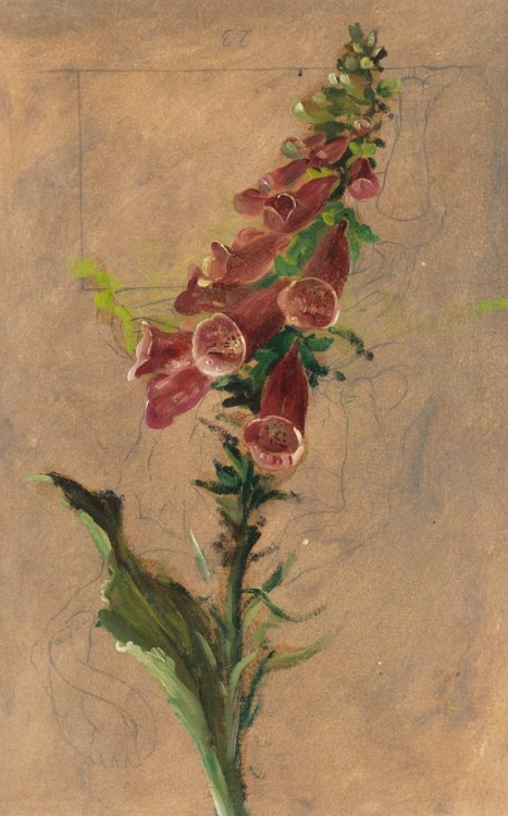 Christian Friedrich Gille Foxgloves Study 19th century
