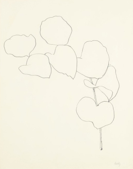 "etceterablog:  Ellsworth Kelly""Briar"", 1960 graphite on paper  28½ x 22½ in. 72.4 x 57.2 cm. via"