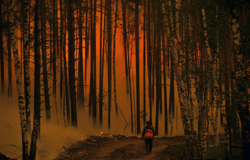 A  Russian man walks in a burning forest near the village of Golovanovo, Ryazan  region, on August 5, 2010. (NATALIA KOLESNIKOVA/AFP/Getty Images)