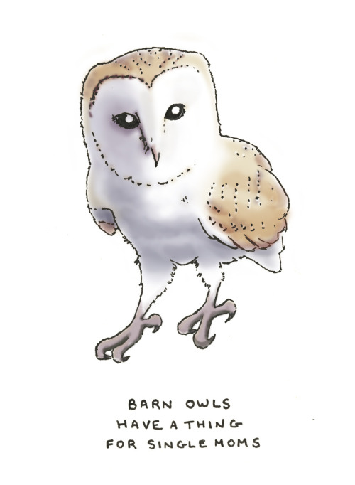 barn owls have a thing for single moms