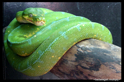 day 27. a photo of last summer A snake from Avilon Zoo.   March usually marks the start of summer in the Phils.  I'm not sure on why we didn't get to plan a trip to the beach last year so I think we decided to go to the Zoo to start off our summer trips hoping we'd get to go on a series of other trips…I guess it didn't happen 'coz this is all I could pull up from my archives for last summer =))