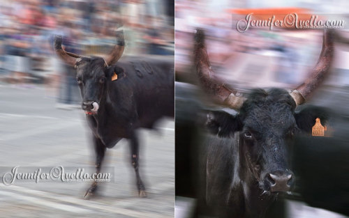 Saint Remy de Provence, France - During the running with the bulls festival. God, I miss it already.