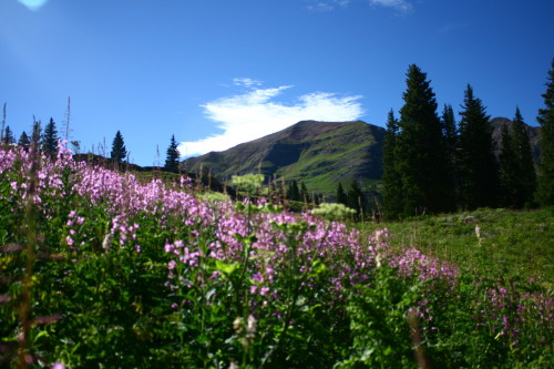 August 11th- Went to Crested Butte and hiked around the lake after the cookout ride to Mt. Princeton in the morning; took the scenic byway and ended up getting lost and taking the longgggg route home and got home really late…but we saw a bear which was awesome.