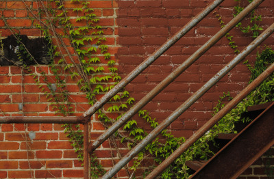 TTFM0084 Fire Escape, Ivy, Brick