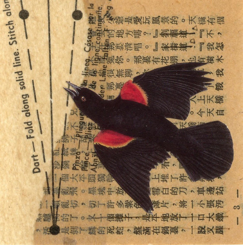 karenh:  black bird collage by paperwerks/kim
