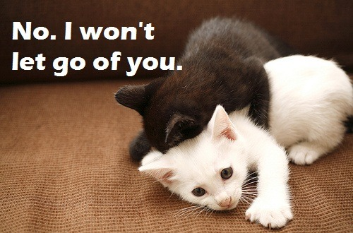theanimalblog:  Won't Let Go.  OHMYGAAA!!! =^.^=