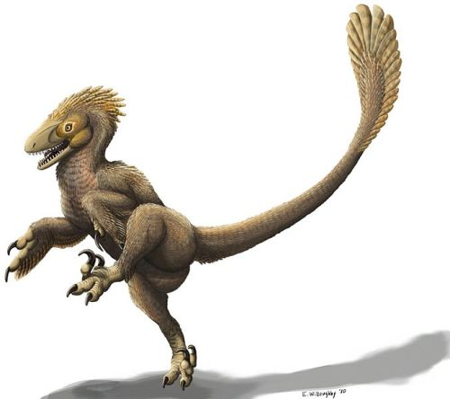 "rhamphotheca: ""Balaur is a genus of dromaeosaurid… (via Wikipedia)"