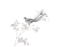 original lyrebird illustration - May 2010
