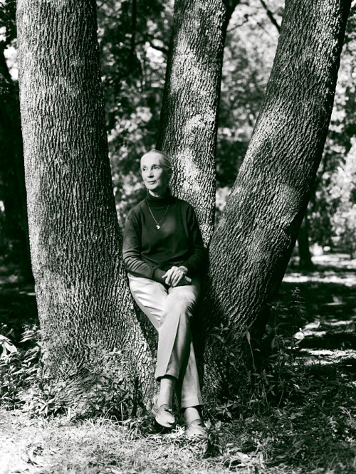 Jane Goodall by Stewart Cohen. He will be signing copies of Identity at Neiman Marcus for Fashion's Night Out tonight. Event details