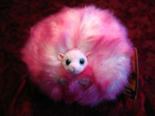 Pygmy Puff from the Wizarding World of Harry Potter.