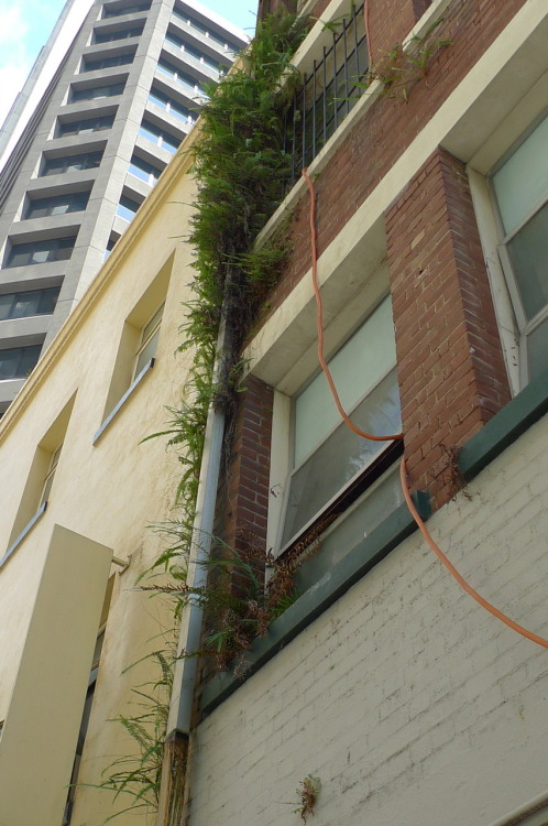 Submitted by Birdy:  Burnett Lane, Brisbane, Australia. One of 500 photos taken in a 3 day visual survey of all spontaneous vegetation in the city.
