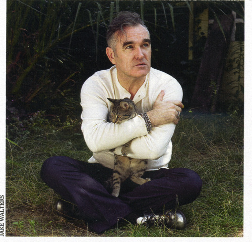 yourcatwasdelicious:  morrissey  Just me, jim, morrissey, and cats tonight.