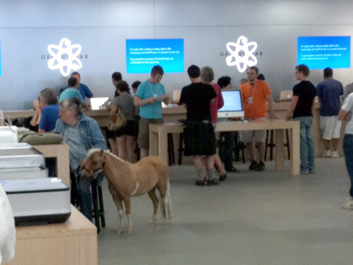 There is a Horse in the Apple Store