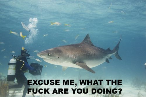 I kinda miss Shark Week. Or maybe I just miss you guys<3