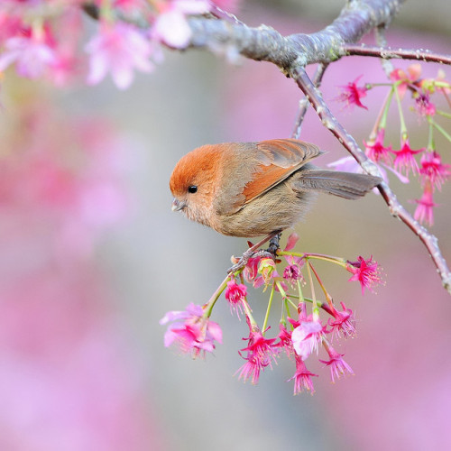 Spring dream (by Sushyue Liao) ~qtgasm