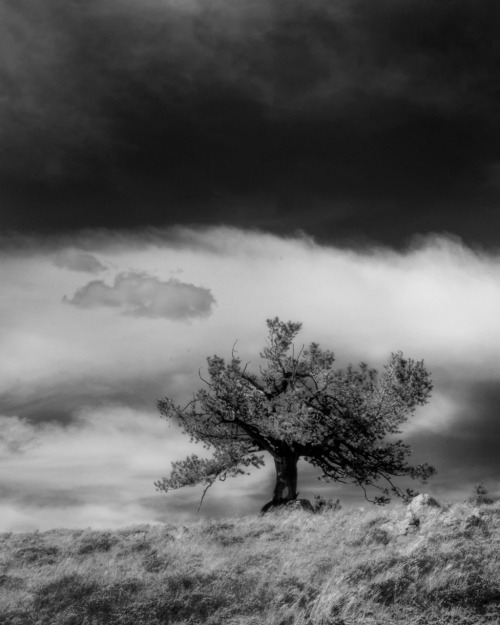 Lone tree on Wyoming hillside.