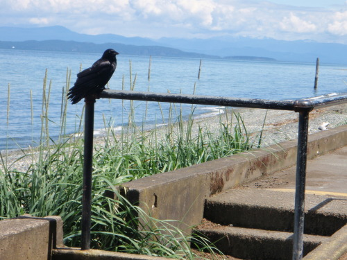 Life's a beach if your a crow.