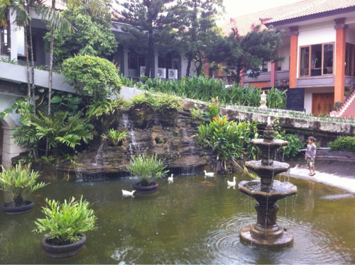 Kai feeding the ducks in the pond in front of the hotel lobby.