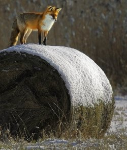 magicalnaturetour:  Andris Eglitis Photographer
