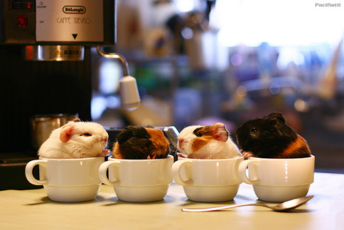 dirtyprettything:  Latte, Cappucino, Caramel Macchiato and Espresso  Sweet Coffees (by ©Pacifist)  Pretty sure I've blogged this before, ohgooooood.