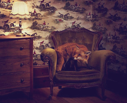 This pet fox does not approve of the wallpaper - I totally support that! ;)