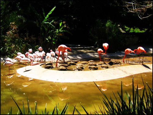 Flamingos, San Diego Zoo. [Photo by me.]