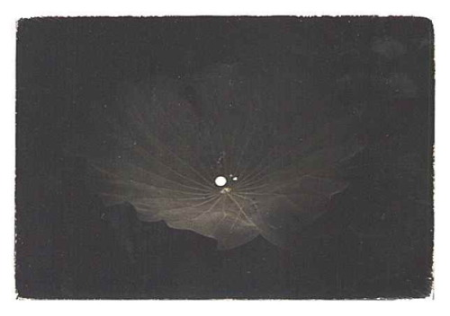 Masao Yamamoto (artist found thanks to snowce) they are all so f****** beautiful I couldn't resist to post them… but there're still tons of stunning photographs, please do enjoy here