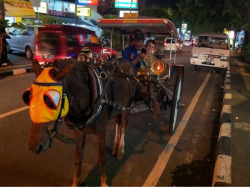 Our last night in Bali, and a horse and cart ride back to the hotel.