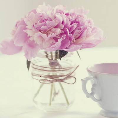 lovelyliving:  favorite flower !