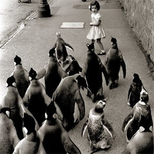 retrogasm:  March of the Penguins down 5th Avenue or that little girl is the Pied Piper…