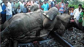 "Seven elephants have been killed by a speeding freight train in eastern India, after two baby elephants strayed onto the tracks and older ones followed to try to save them.  One of the elephants was dragged for about 400 meters (yards), while the other four died on the spot,"" district official Kalyan Das told India Today. Two others were severely injured and died hours later, he said. ""It is a ghastly sight,"" forest conservator S. Patel told the same paper. The baby elephants were among the dead.  (via 7 Elephants Killed in Indian Train Crash)"