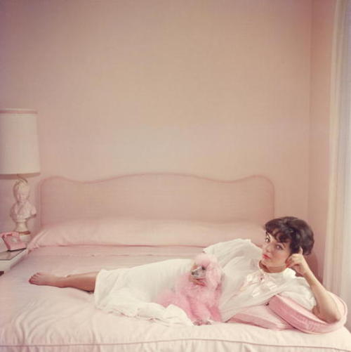 Joan Collins photographed by Silm Aarons. I've always wanted a pink poodle.