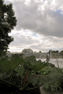 Kew Gardens, with Gunnera in the foreground.