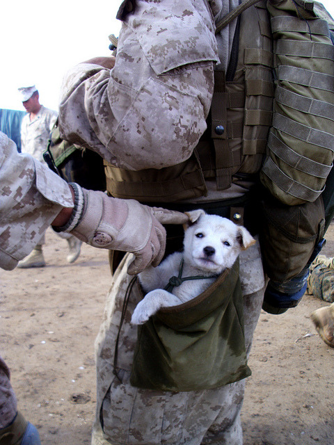A small puppy wandered up to U.S. Marines from Alpha Company, 1st Battalion 6th Marines, in Marjah, Afghanistan on ******. After following the Marines numerous miles, a soft hearted Marine picked the puppy up and carried the puppy in his drop pouch.   oooooo little puppydoo!