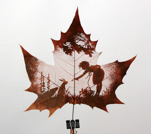 Leaf Carving Art  The process of carving is performed by artists using tools to carefully remove the surface without cutting or removing the veins. The veins add detail into the subject matter of the carving. The material or most common leaf used in leaf carving is the leaf of a Chinar tree. The Chinar tree is native to India, Pakistan and China. Chinar leaves have a close resemblance to maple leaves.