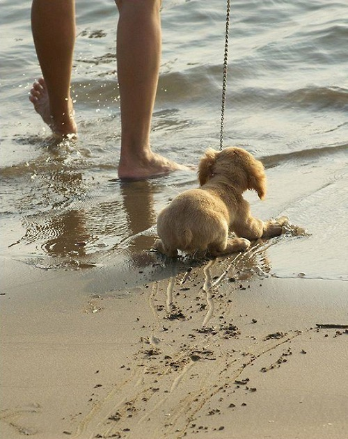 awww the puppy is scared of the water…
